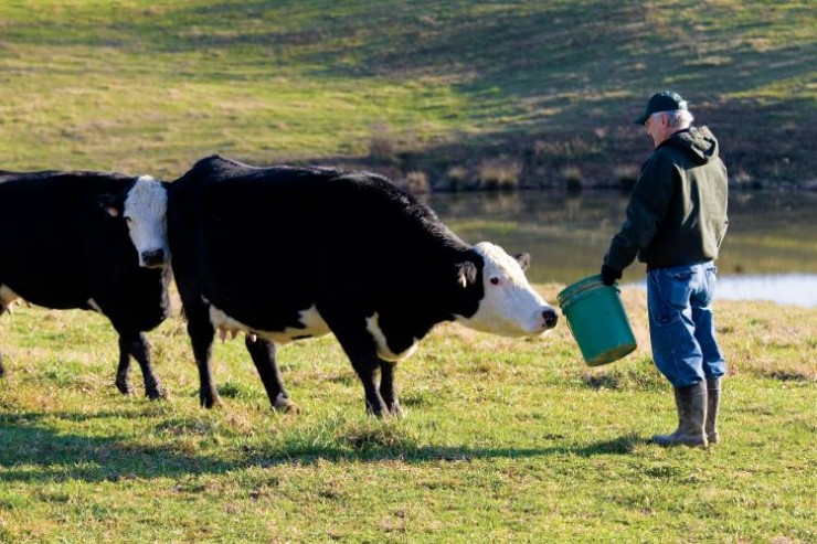 Telefónica conectará la industria ganadera al IoT con Cattle-Watch