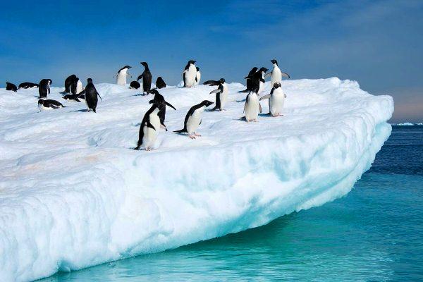 Antártida, el termómetro del planeta Tierra