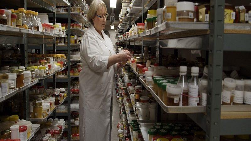 """""""Podredumbre"""" es la nueva serie documental alimentaria de Netflix"""