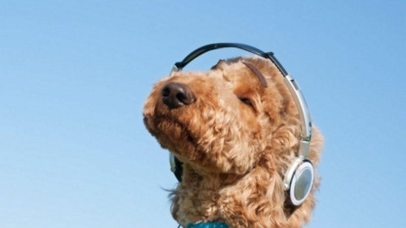 Spotify lanza listas de reproducción para las mascotas de la casa